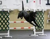 Phillie happy jump