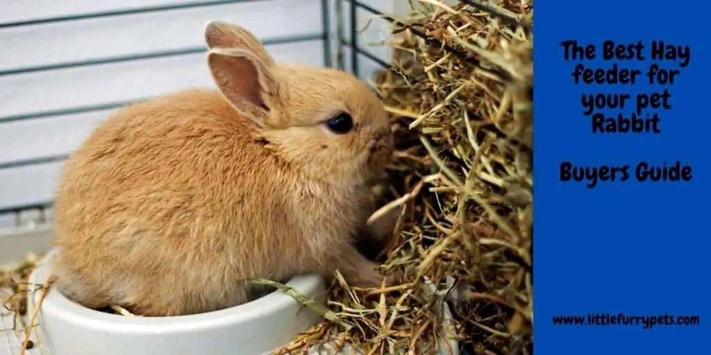 best rabbit hay feeder our eight