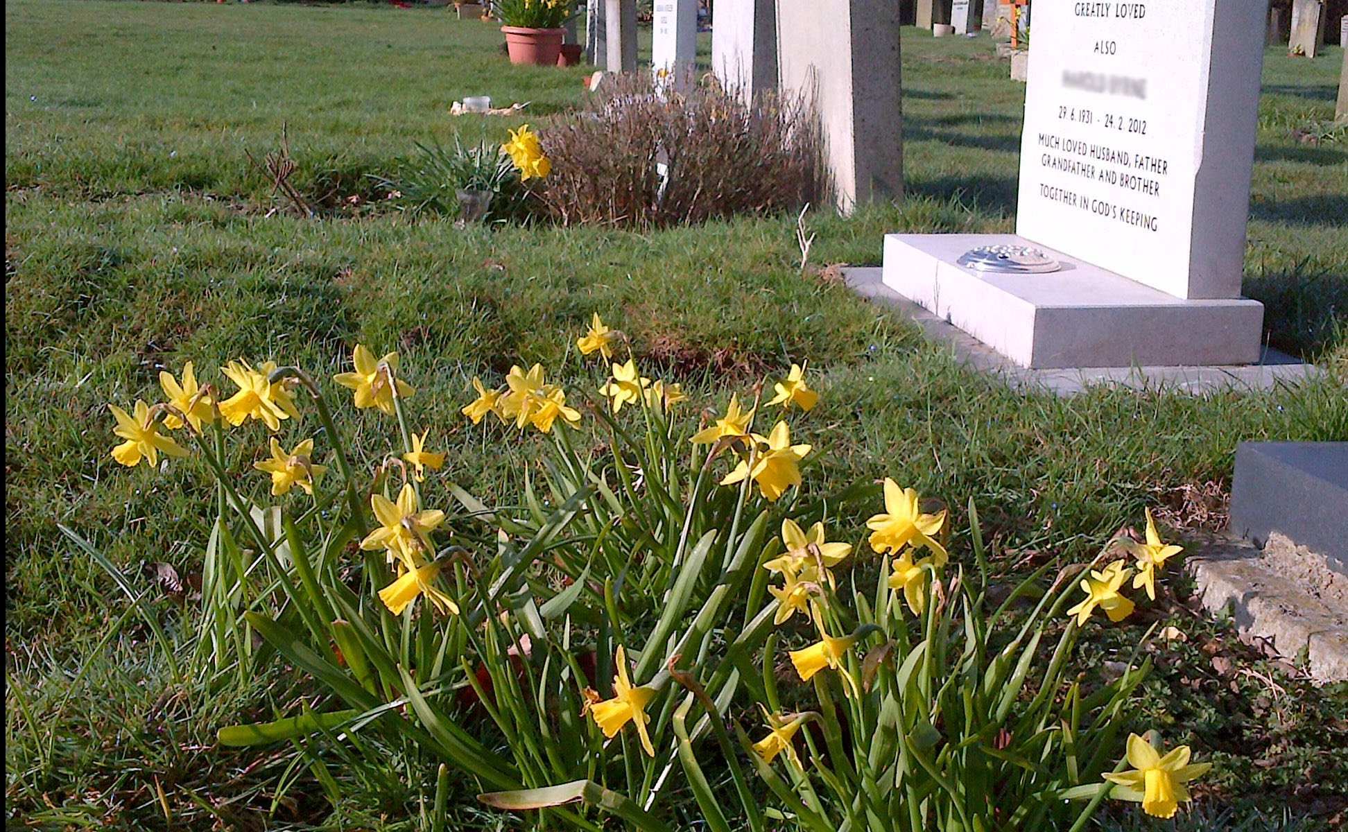 Photo of spring flowers by headstones at Little Gaddesden Church.