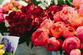 peony season is here again.