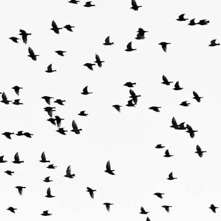animals-birds-black-and-white-1386454