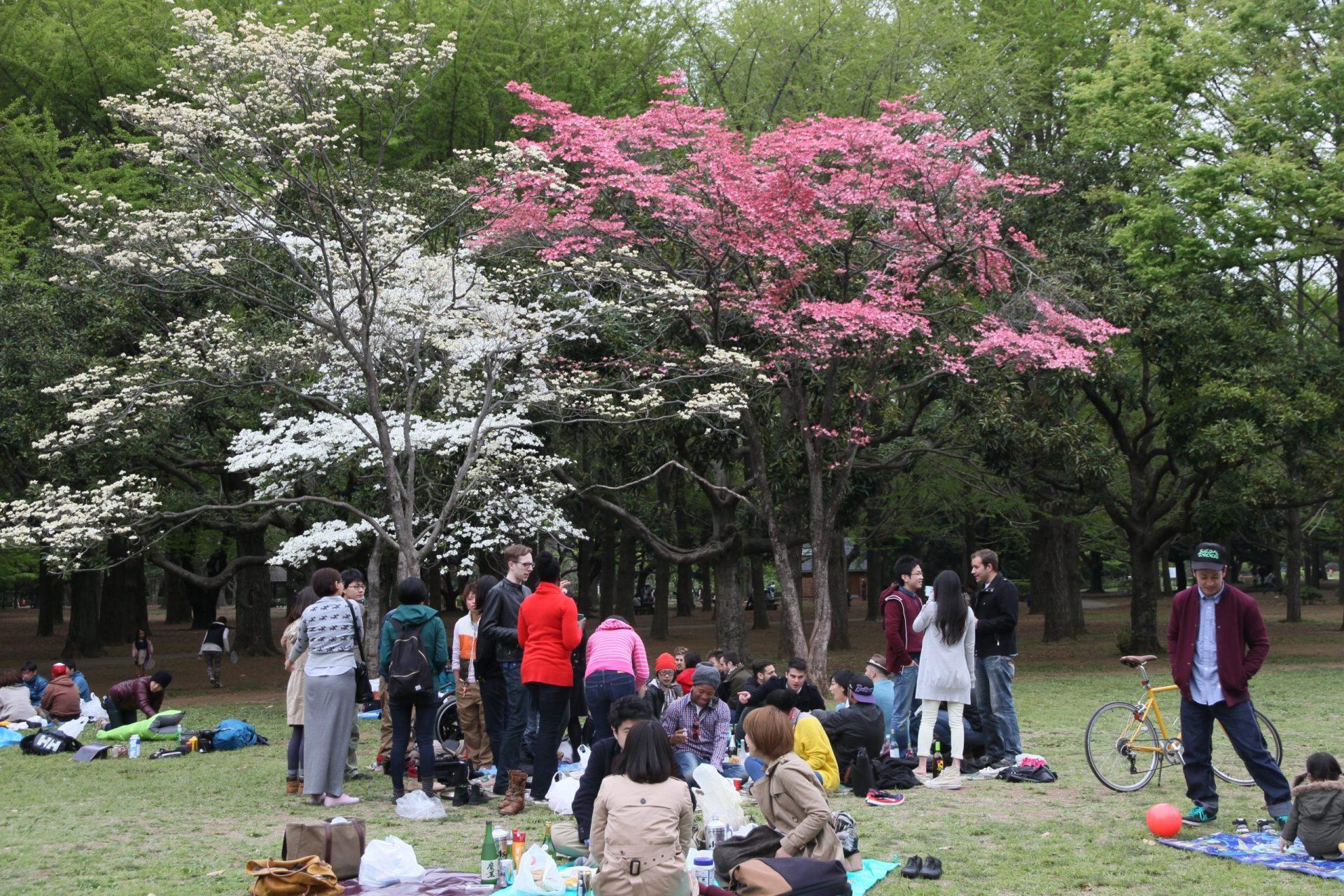 Yoyogi Park, Tokyo - Little Grey Box