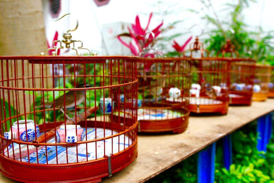 Yuen Po Bird Market Hong Kong