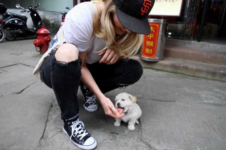 Puppy in Tunxi
