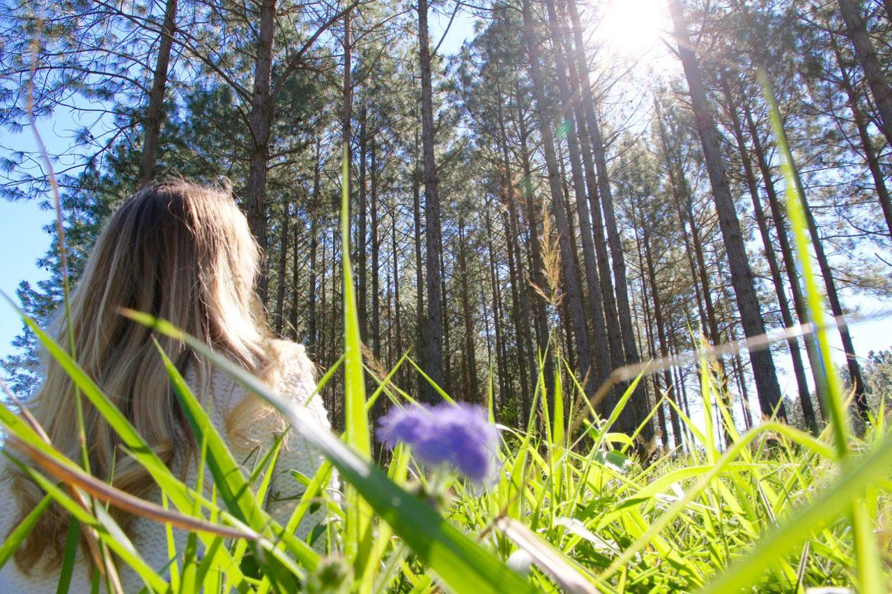 Phoebe Lee Sunshine Coast Hinterland Blog Travel Inspiration