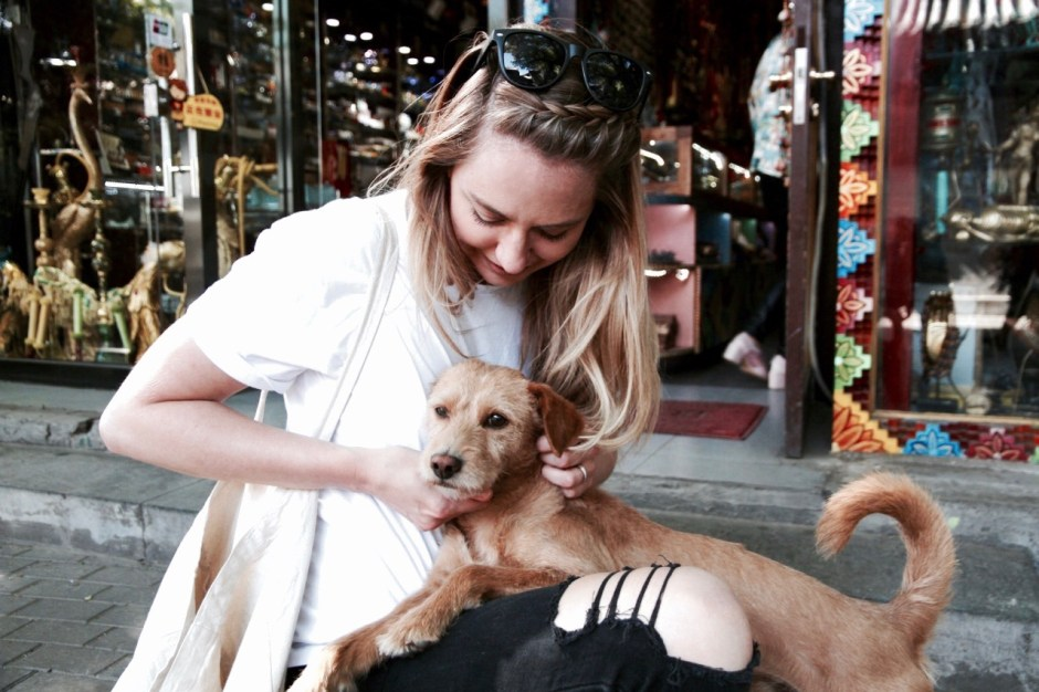 7 Ideas on what to do with your pet when you travel