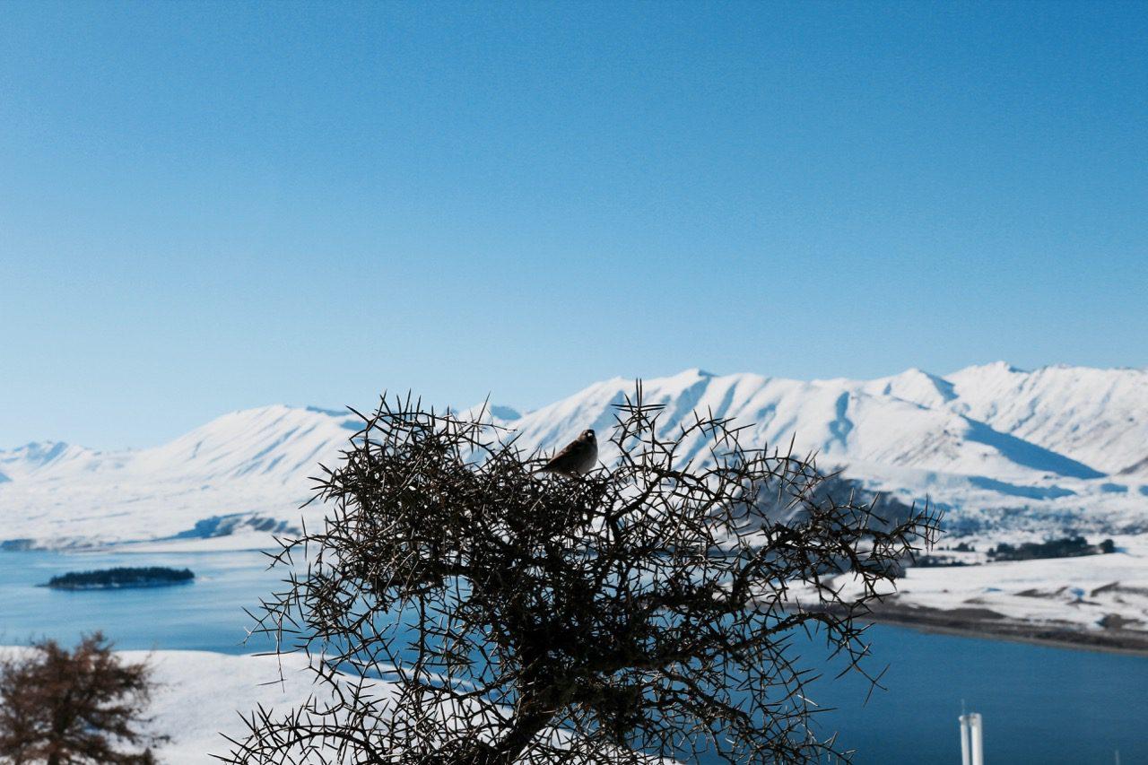 Everything you need to know to plan a visit to Lake Tekapo