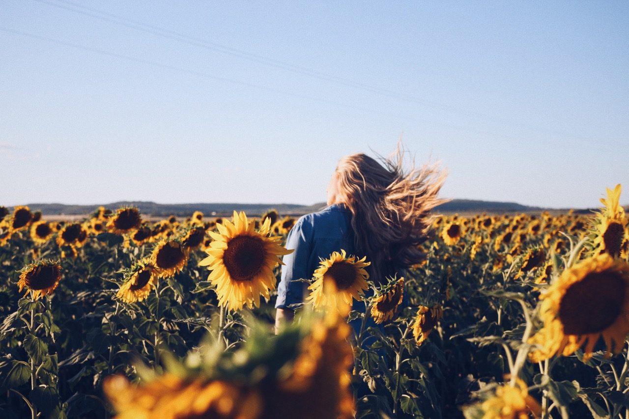 Allora Sunflowers © Little Grey Box