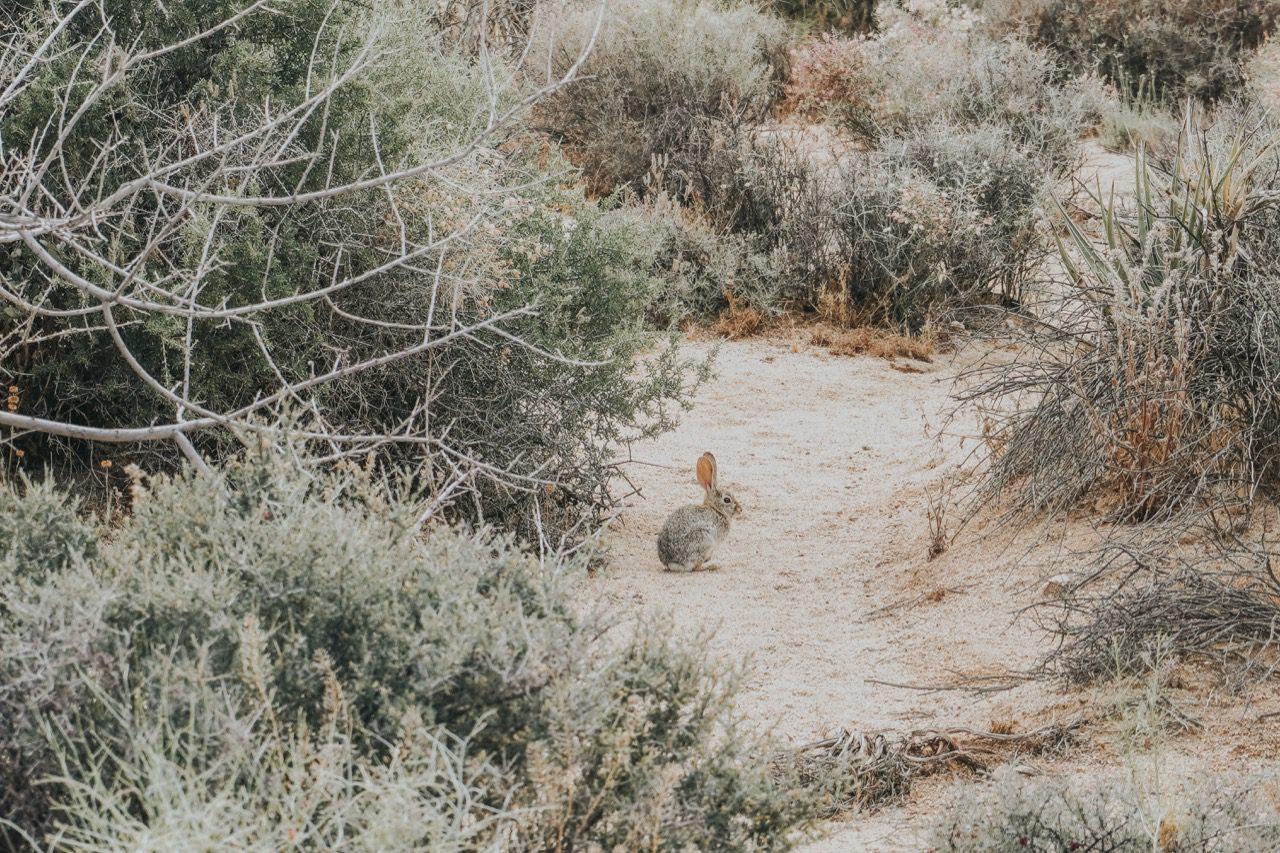 Joshua Tree National Park © Little Grey Box