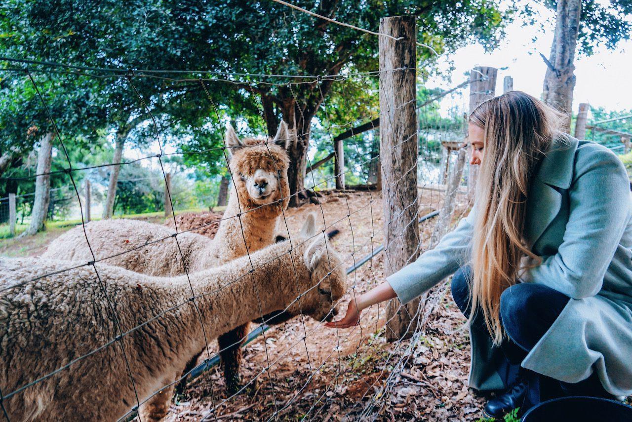 Dayboro Cottages and Llama Walks © Little Grey Box