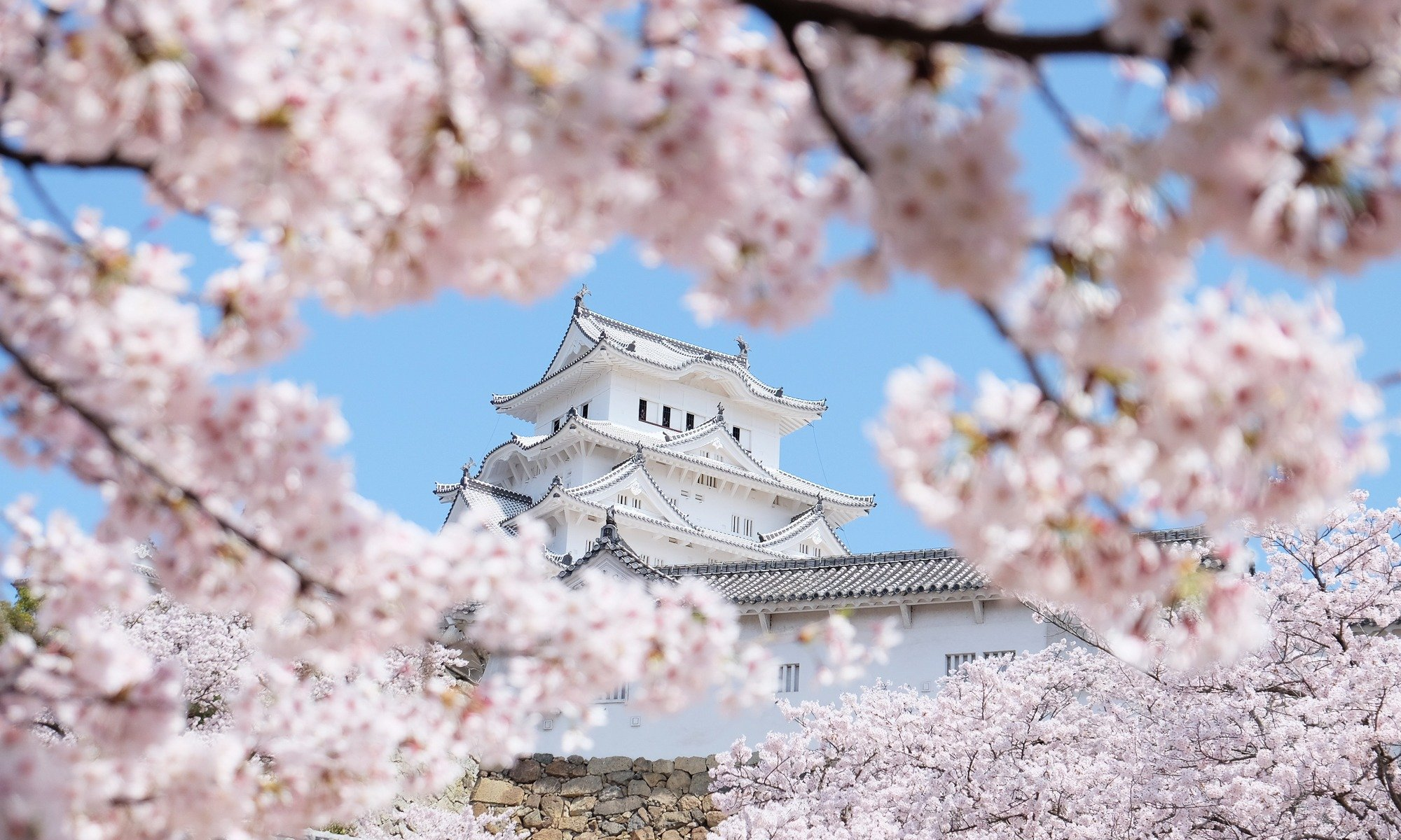 Best Time To Travel To Japan For Cherry Blossoms