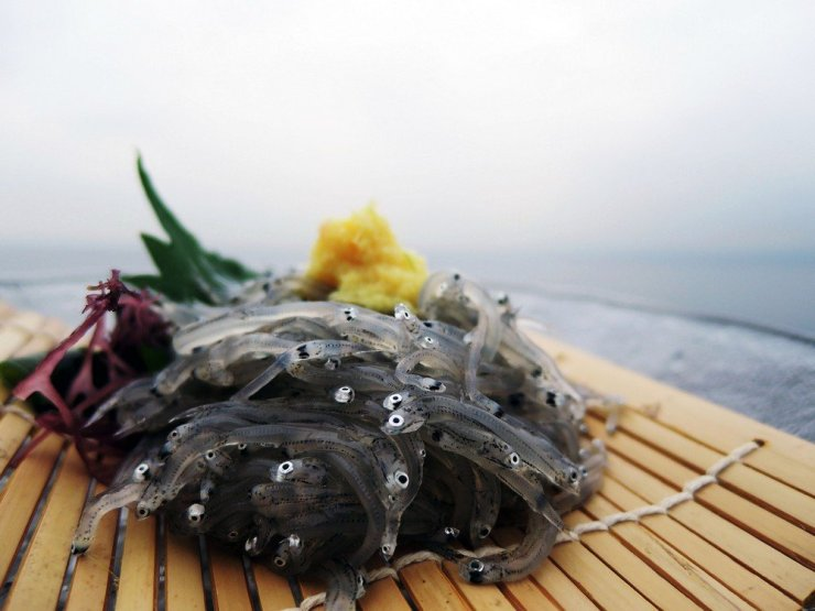 When in Enoshima, find a restaurant overlooking the sea and order the island's specialty: raw shirasu or baby fish.
