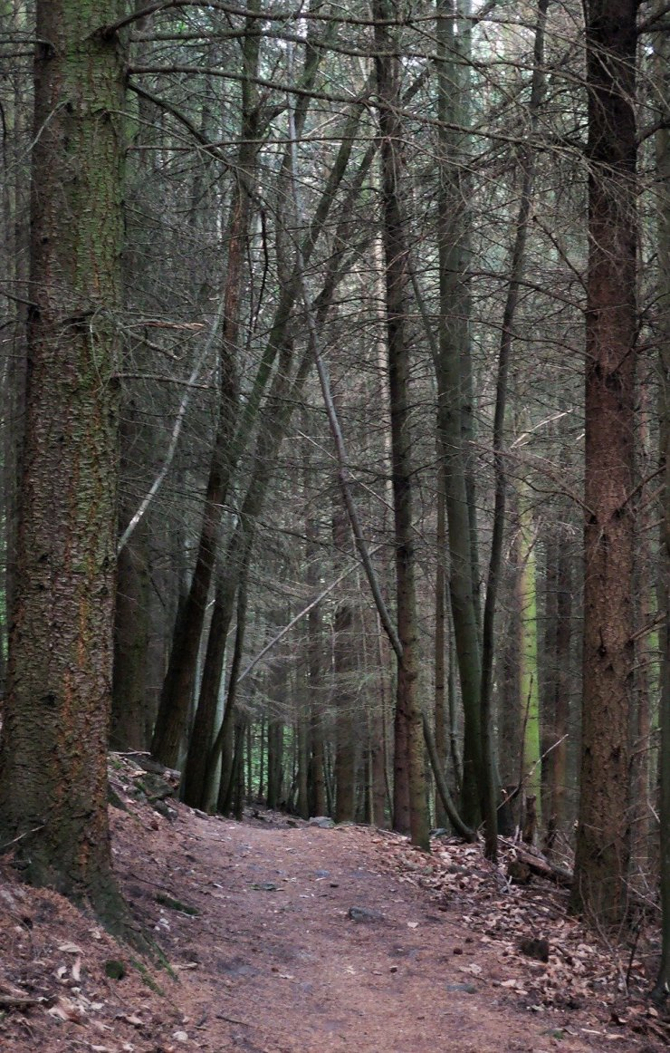 Alsace is a great place for hiking. Just be prepared to enter creepy forests like this!