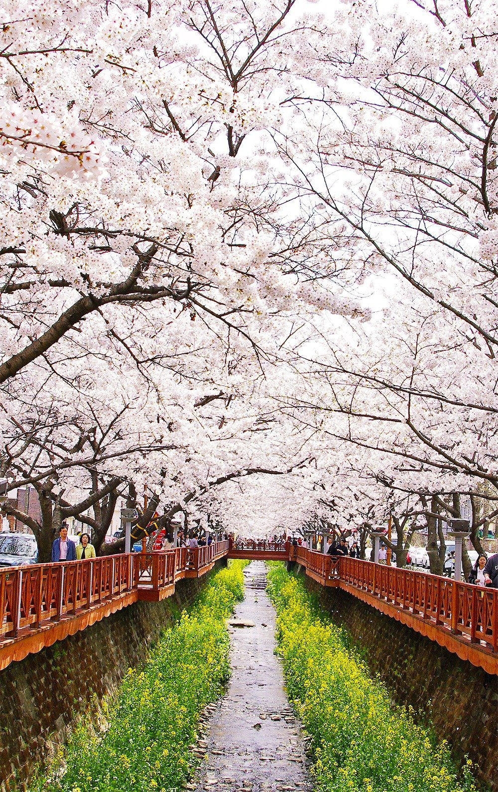 Come spring time, make your way to Jinhae, the home of South Korea's biggest cherry blossom festival. Walk along the Yeojwacheon stream and admire the beauty of 300,000 cherry trees in bloom.