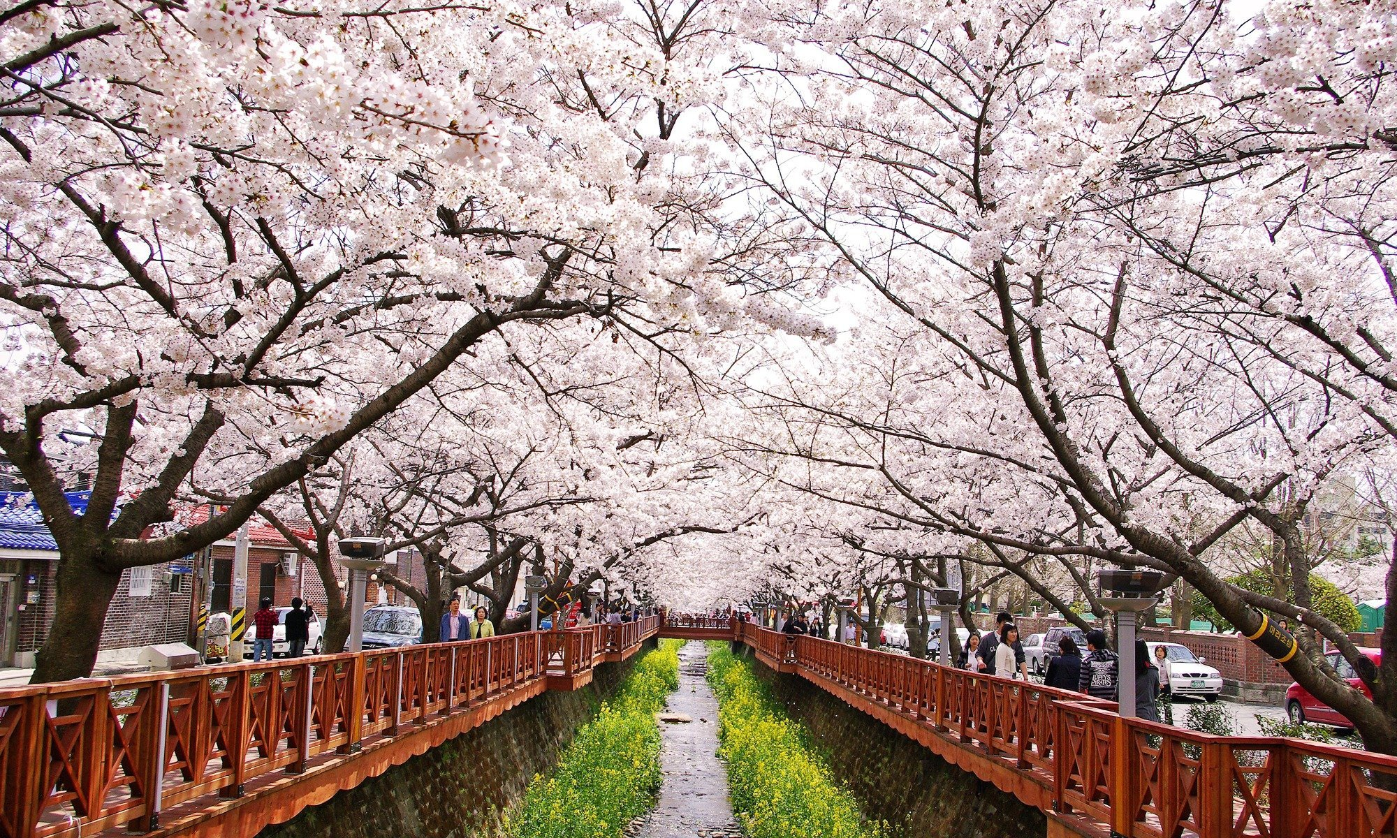 Spring in South Korea – when and where to see the cherry blossoms