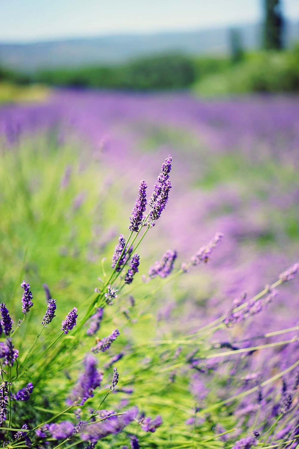 Fancy a frolic in Provence's lavender fields? Or perhaps a stroll through Roman ruins and medieval communes? Soak in the sunshine and beauty of Southern France in this essential road trip itinerary that goes from Languedoc to Provence through charming villages, floral fields, and bendy mountain roads. Here are 5 amazing road trips you'd love to take in France.