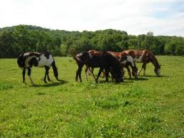 Housing for Horse Ranch