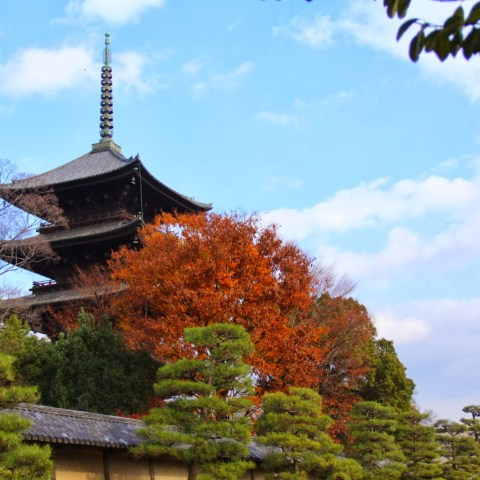 Toji Temple (東寺)