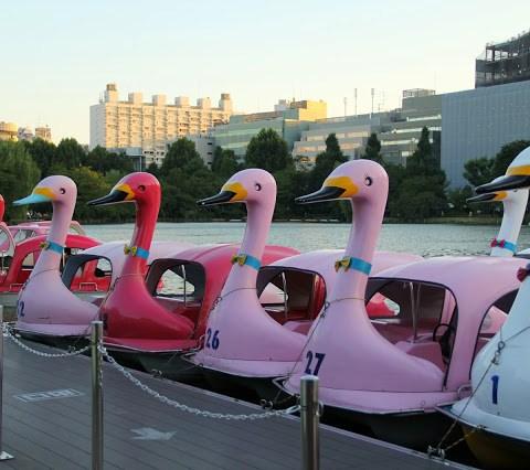Swan Boats at Ueno Park