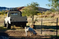 Campgrounds with animals. (thumbs up)