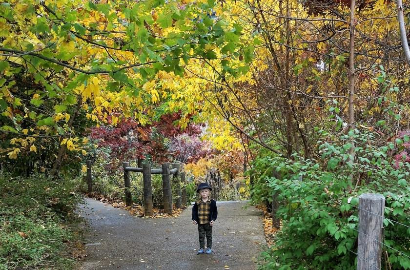 fall-foilage-brooklyn-bridge-park