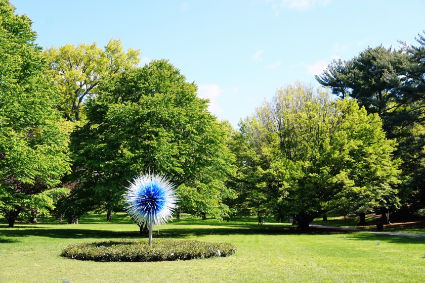 Chihuly: Sapphire Star
