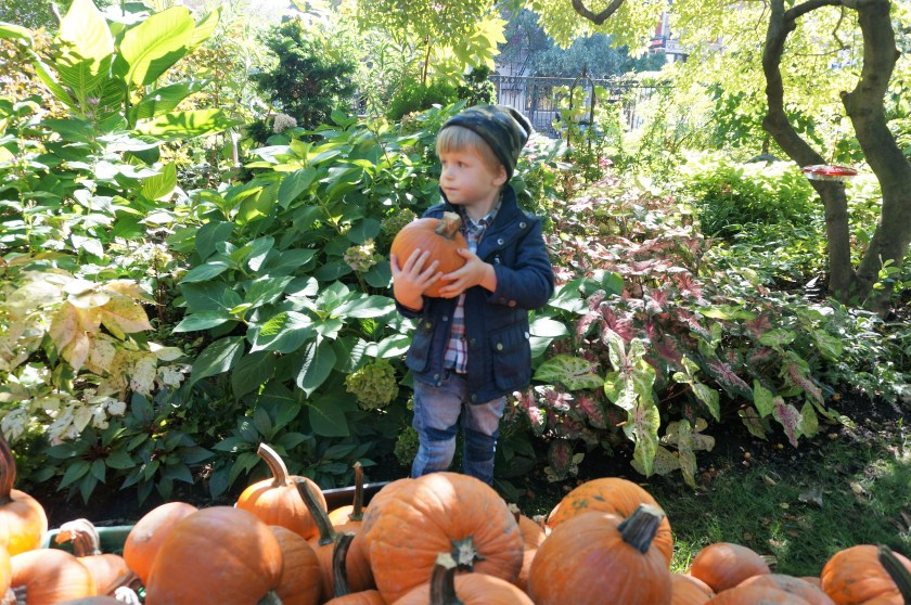 Autumn in the City - Fall Festivals