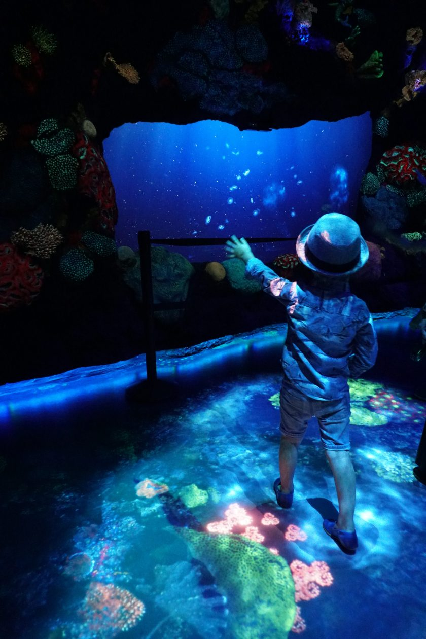 Under the Sea at National Geographic Encounter Ocean Odyssey