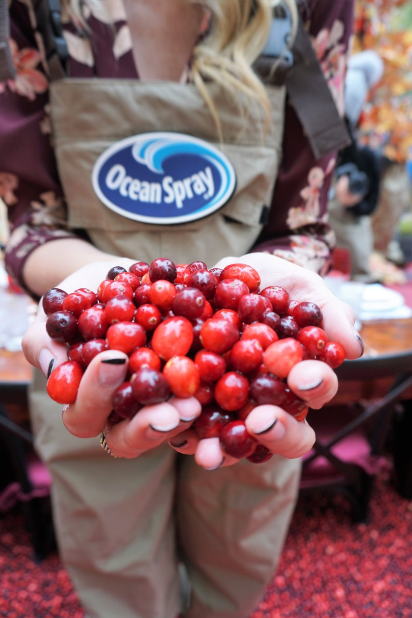 A Berry Cool Experience - Ocean Spray Dinner in the Bog