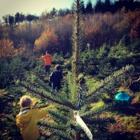 The Magic of Choosing and Cutting Your Own Christmas Tree at Wilderness Wood, Sussex