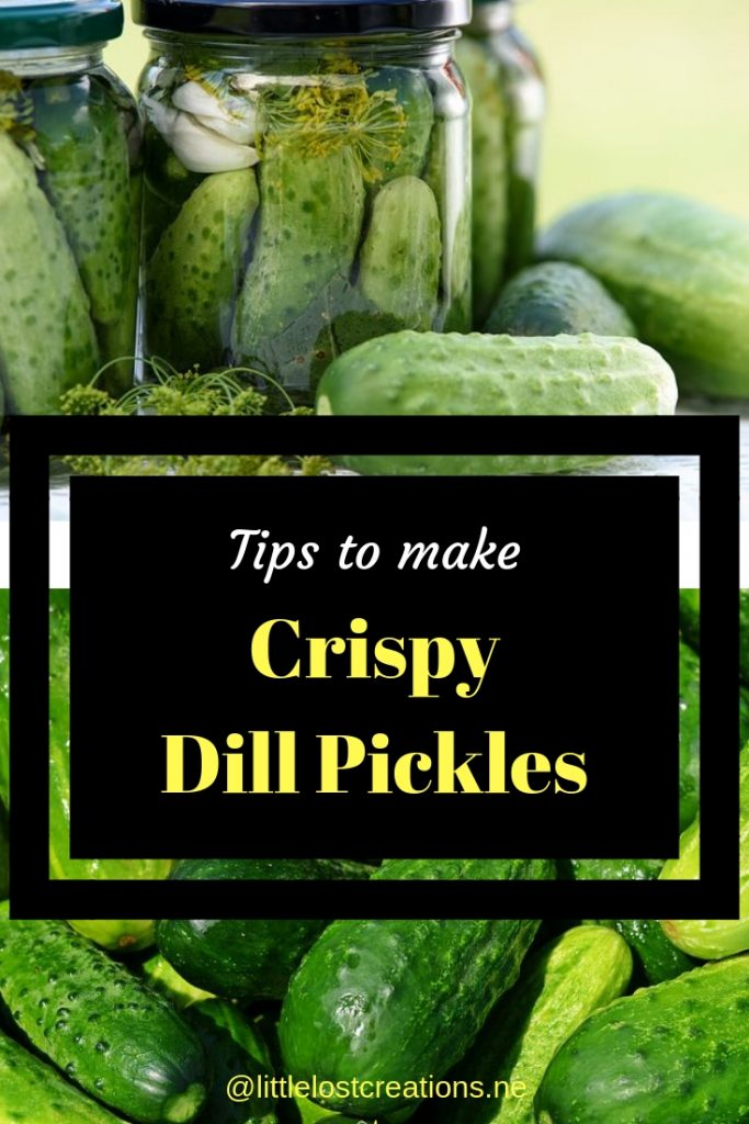 Tips to make Crispy dill pickles, bottle of dill pickles with dill and a pile of cucumbers