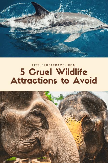 Pinterest pin for cruel wildlife attractions