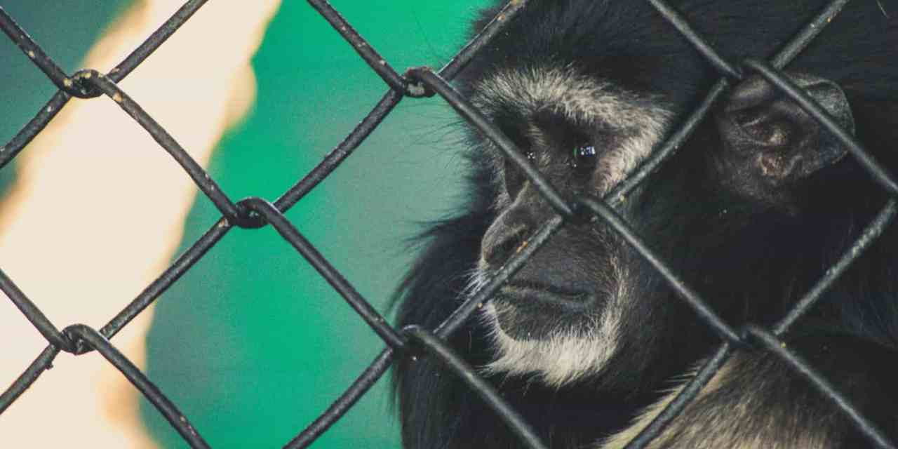 For the Love of Animals! Avoid These Cruel Tourist Attractions when Travelling