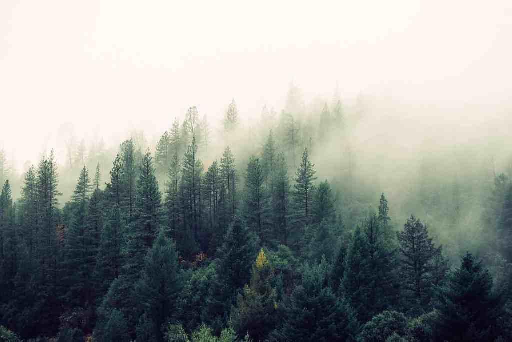 Climate-conscious traveller