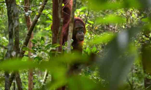 Discover Borneo: The Lungs of the World