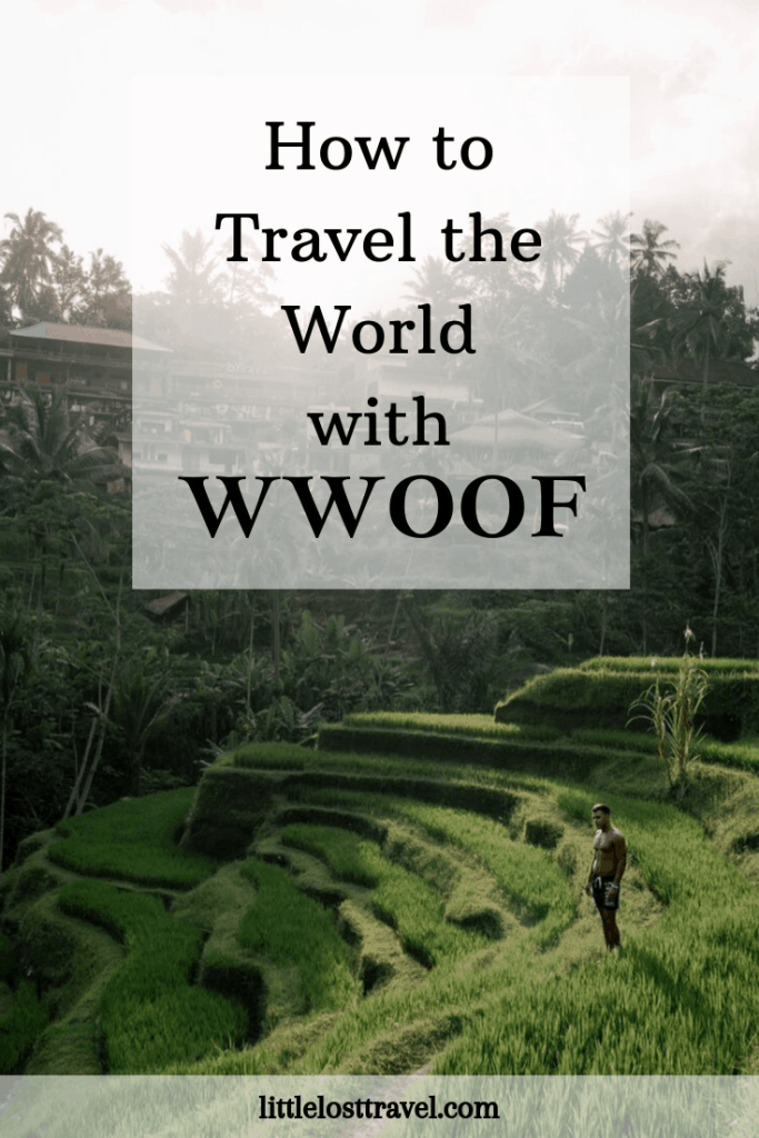 Pinterest pin for How to Travel the World with WWOOF. A man standing in the croplands.