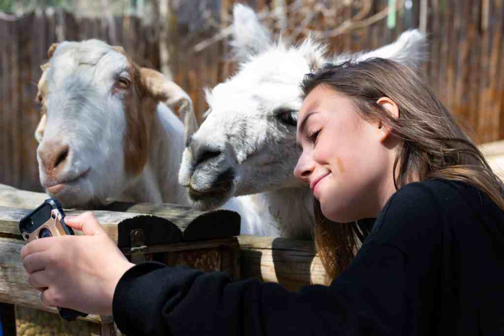 A girl on a WWOOF farm taking a picture with goats.