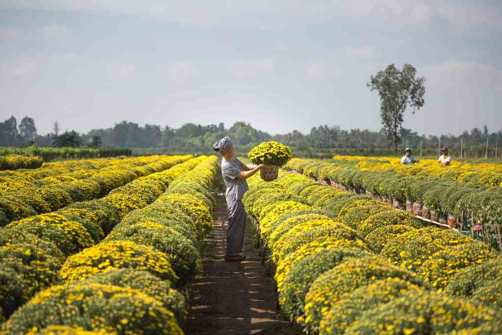 A woman on a farm arranging yellow flowers.