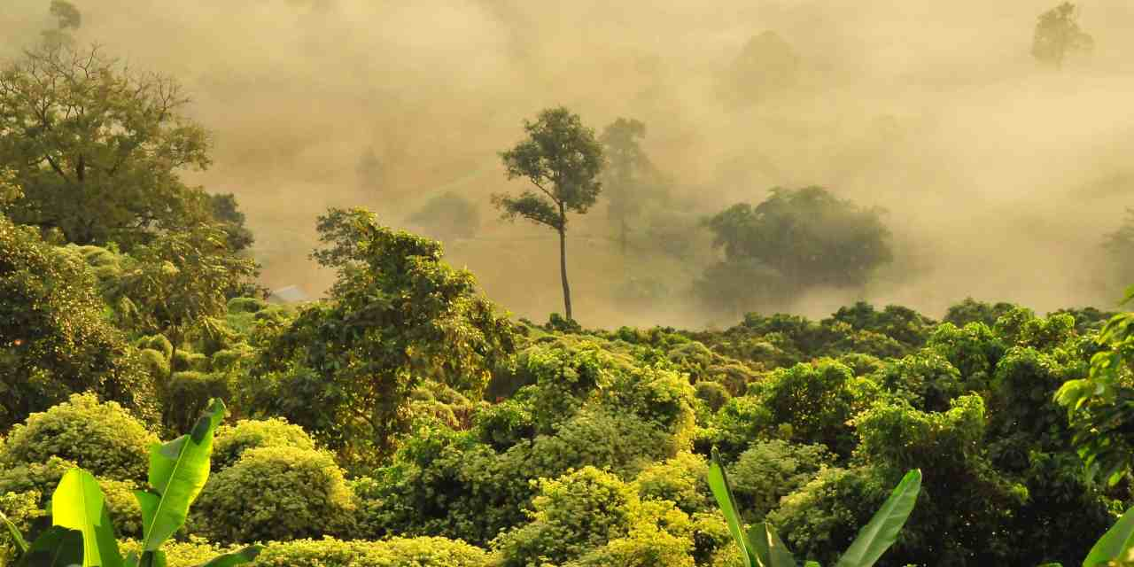 What Is Carbon Offsetting and Does It Really Work?