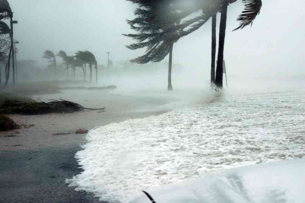 Affects of a hurricane by the sea with trees being blown by the wind.