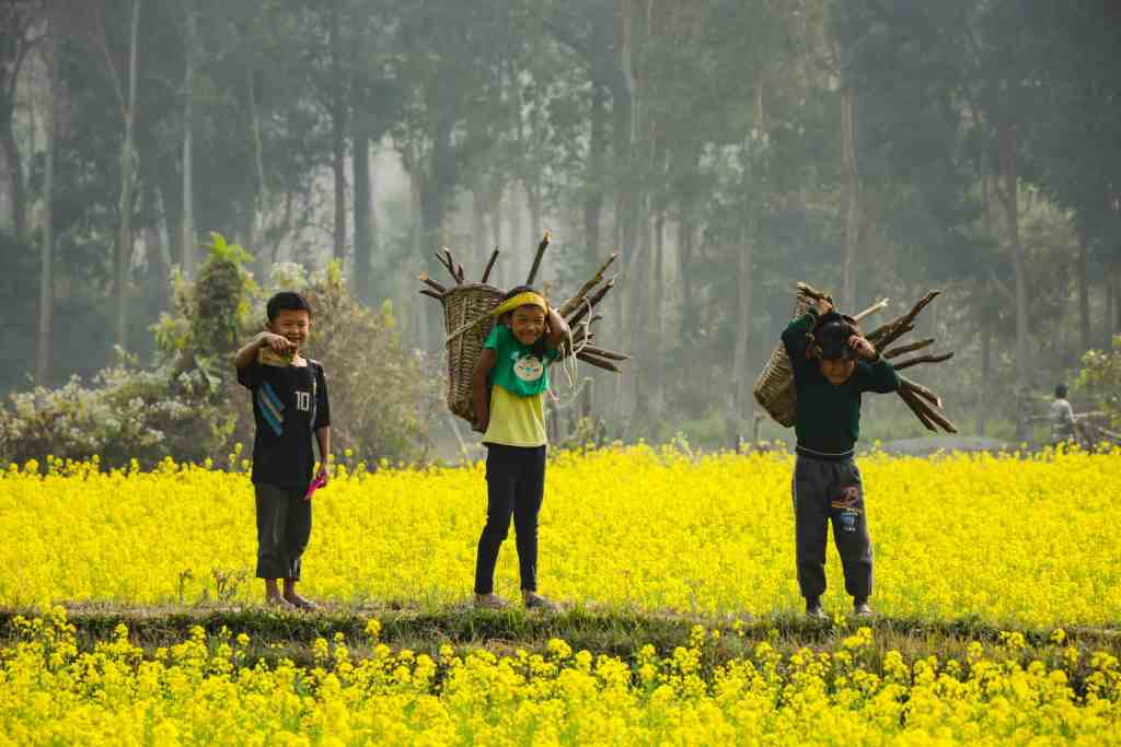 Three small boys in a yellow field for What Is Sustainable Travel and What Does It Mean?