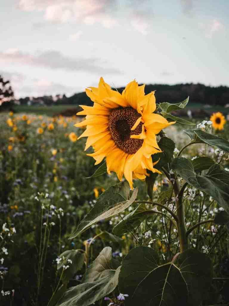 Beautiful flowers in a meadow