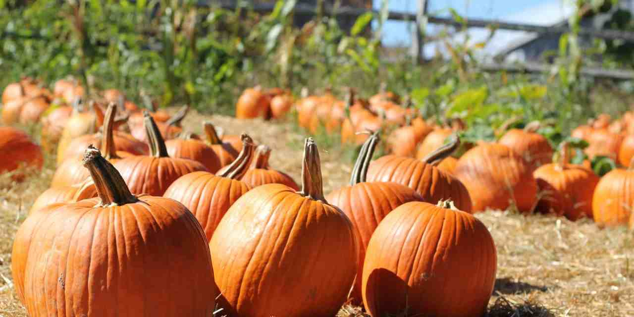 11 Best Pick Your Own Pumpkin Farms in the UK