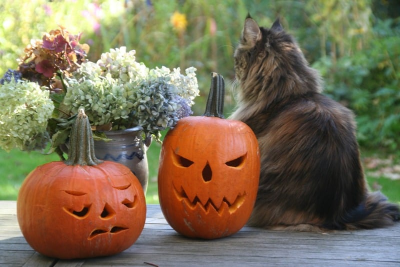 Carved pumpkin with cat and flowers
