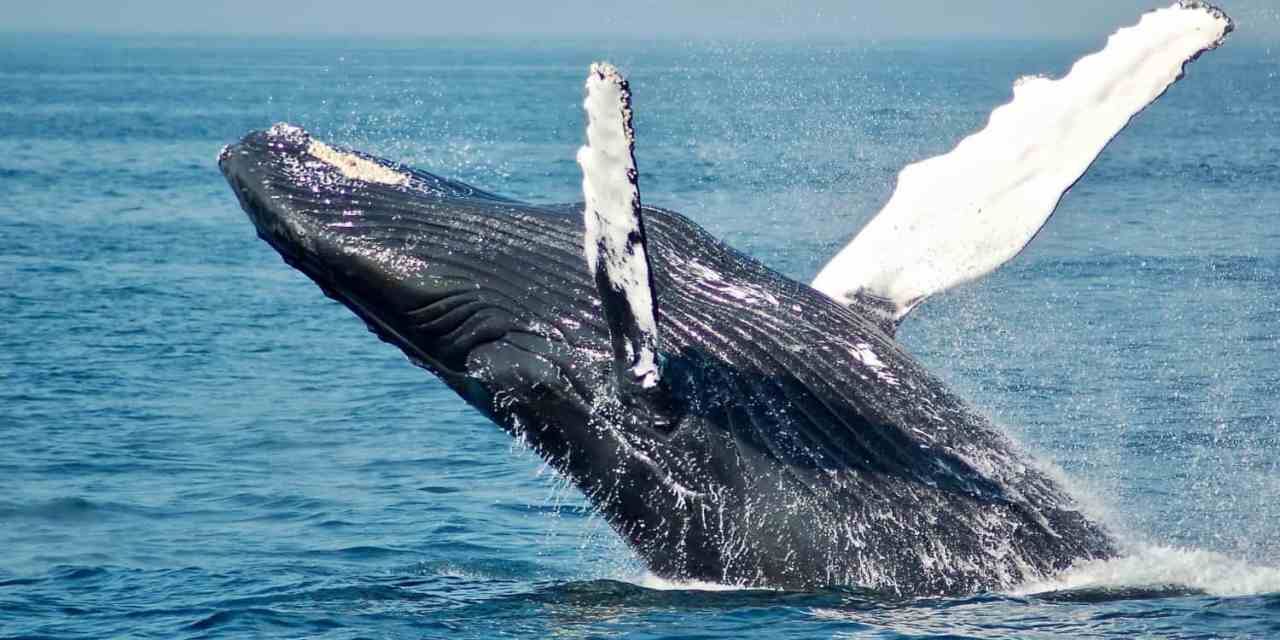 The Best Place to See Whales in New Zealand