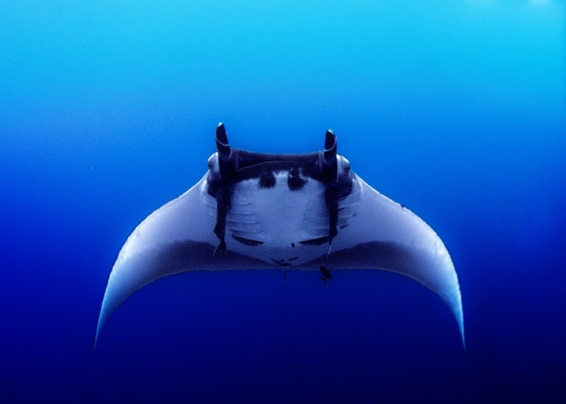 It's important to be repectful of the mantas.
