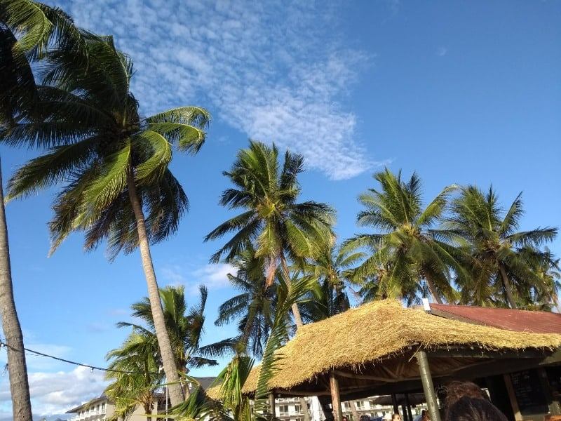 Palm trees at Bamboo Travellers hostel in Fiji