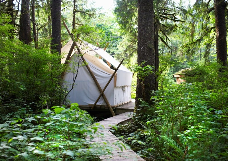 Glamping tent at the end of a track through the threes.