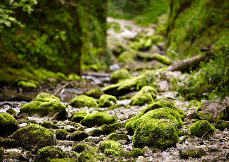 A stream running over mossy rocks. A recipe for relaxation.