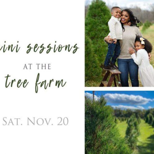 Tree Farm Minis